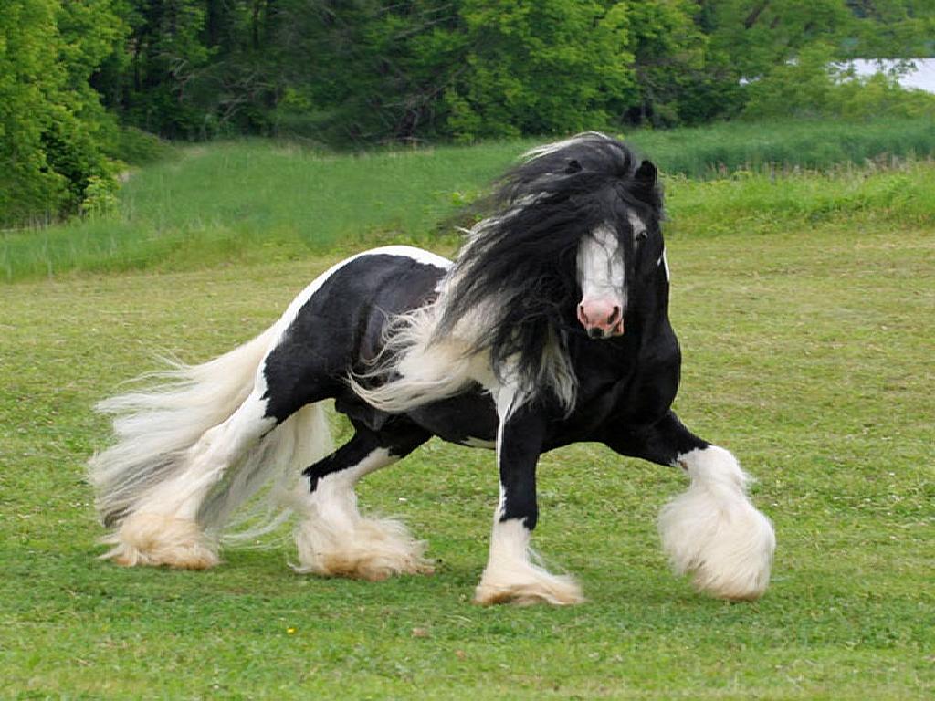 اجمل-خيول-العالم-1.jpg