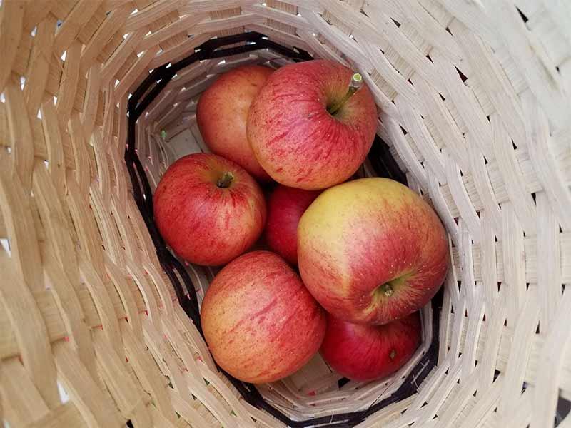 Handmade fruit basket.jpg