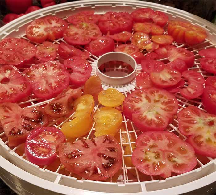 More Tomatoes Dehydrating.jpg
