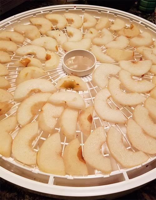 Pear Dehydrating.jpg