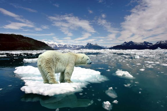 Polar-Bear-e1562056651916.jpg