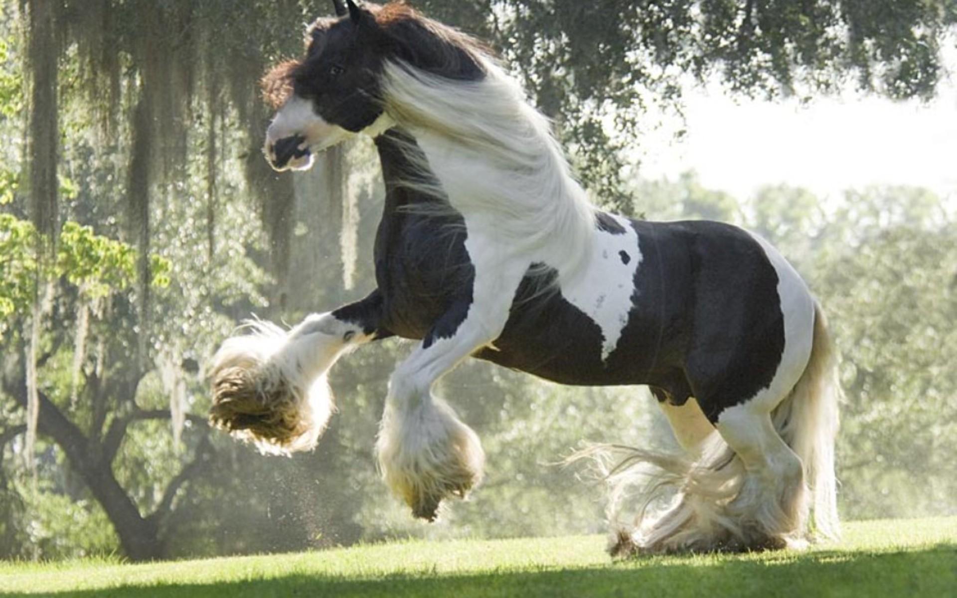 shire_horse.jpg