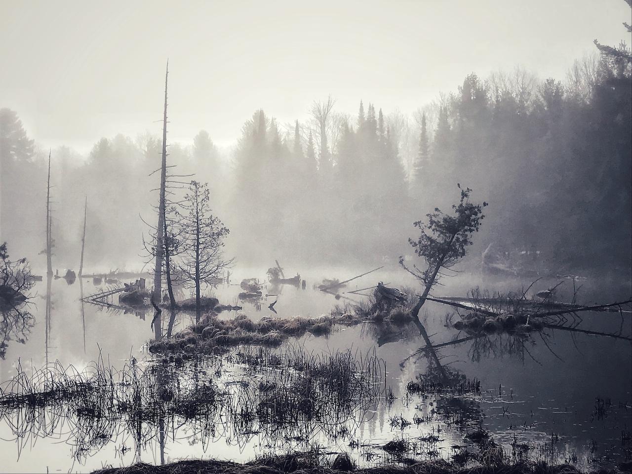 Upstream 2.jpg